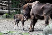 Der Zoo sucht Tierpaten und Namen für zwei Jungtiere