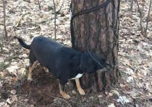 Barnimer Veterinäramt befreit ausgesetzten Hund
