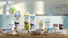Salget af laktosefrie mejeriprodukter er steget med 24 pct. det seneste år: Nu udvider Arla serien af laktosefri produkter