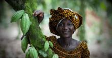 Glassföretag ger kakaoodlare mer betalt