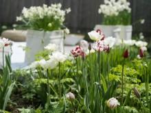 Välkommen att besöka oss på Nordiska Trädgårdar!