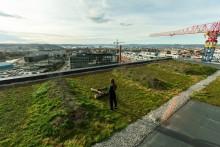Økologi er et kinderegg for byggeprosjekter