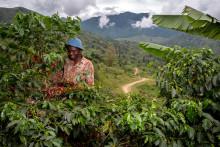 Nespresso utökar serien Reviving Origins - Uganda är äntligen tillbaka på kaffekartan