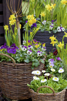 Tjuvstarta våren på trappan och balkongen