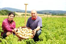 Die ersten Richeröder Frühkartoffeln sind da