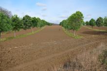 Klimaschutz und Biomasseerzeugung durch Agroforstsysteme