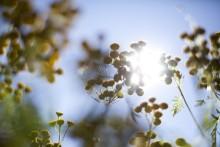 Over 900 søkere til sommerjobb for ungdom i Bydel Stovner