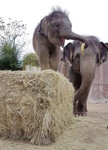 Zoo Leipzig startet Spendenaktion: Ein Weihnachts-Leckerbissen für dein Lieblingstier