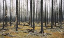 Högaktuell skogsbrand porträtteras i ny utställning på Fotografiska