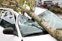 Sturmtief Lolita: Diese Versicherungen sind jetzt wichtig