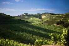 Bobilferie blant tyske vinranker