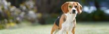 Sony lanserar nya uppdateringar med ögon-autofokus för djur till a7III och a7RIII