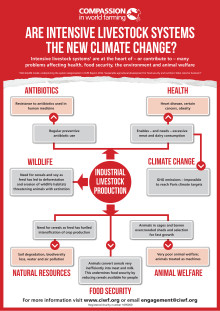 Intensive Farming Climate Change Poster