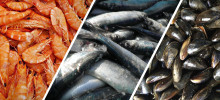 New research recovers nutrients from seafood process water