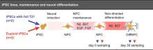 Metylering som påverkar hjärnans utveckling vid Trisomi 21