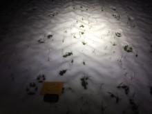Länsstyrelsen har spårat två vargar i par i Skåne