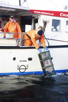 Hummerfiskepaket