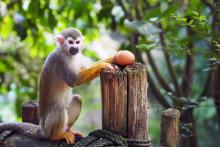Affenstarkes Osterprogramm im Zoo Leipzig