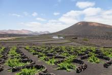 Lanzarotes bizarrer Charme - Mit alltours auf die Insel der Gegensätze reisen