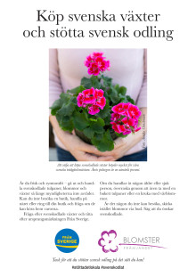 Köp svenska pelargoner och stötta svenska odlare