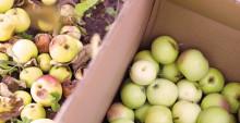 Nu blir fallfrukten biogas och biogödsel