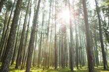 Svenska Teknik&Designföretagen ökar sitt fokus på hållbarhetsfrågorna