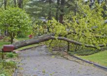 Näin vakuutus korvaa myrskytuhoja