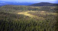 Mer mark skyddad som naturreservat i Dalarna