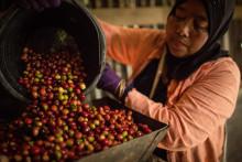 Fairtrade ger kaffeodlare trygghet på osäker marknad