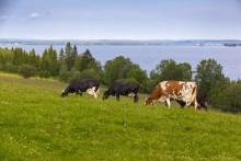 Endast en av fem norrlandskommuner har mål för lokalproducerade livsmedel