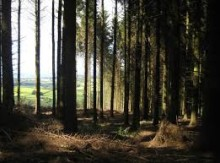 Views sought on woodlands strategy for Moray