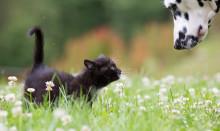 Tre stipendier till forskning om djurhälsa