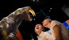 Spännande höstlov på Naturhistoriska riksmuseet! Upplev Cosmonova, aktivitetsrummet Labbet och museets utställningar.