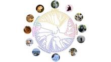 240 mammals help us understand the human genome