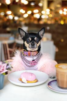 Votre animal a du chien ?  Voici comment en faire une star d'Instagram