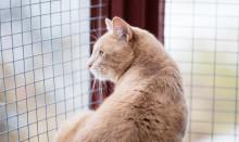 Samarbete för att hjälpa hemlösa katter