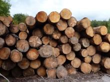 Vildledt af biomasse