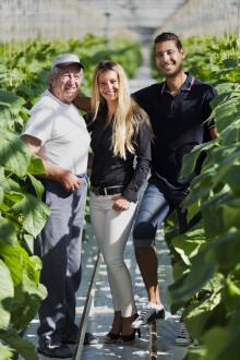På familjeföretaget Bralex odlas det gurka i mängder utanför Arlöv!