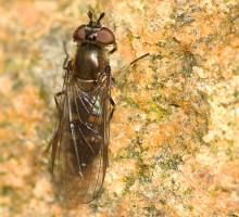 39 helt nye arter fundet på Ærø
