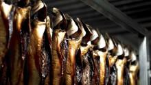 Nu är det högsäsong för makrillfiske på väskusten