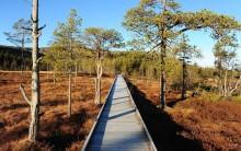 Välkommen på skräpplockardag 15 juni i Fulufjällets nationalpark!