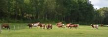 Behövs svensk mjölkproduktion?