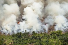 Children's Forest Fire Detection System Deployed by Sony Europe!