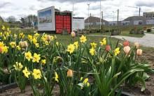 Riksbyggens pop-up trädgård får Täby Park att blomma