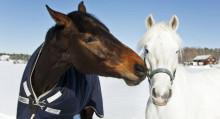 Nya föreskrifter om hästhållning