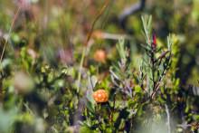 Fokus på familj och ekologiska produkter när Season SPA öppnar i Åre