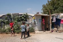 Svensk Trädgård uppmanar fler att bidra med fröer till Syrien