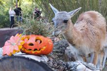 Gruselwusel und Feuershow: Halloween-Spektakel am 31. Oktober 2018 im Zoo Leipzig