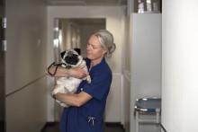 Stipendium till forskning om livshotande sjukdomen TBE hos hund