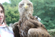 Auténticas imágenes 100% a vista de águila